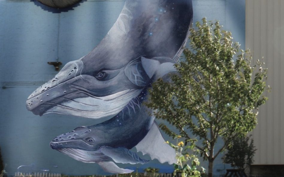IF Whale Mural